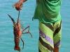 413-lobster