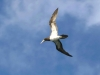 458-fischervogel