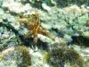Auch Seesterne gibt es noch in Kroatien
