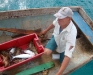 Langustenfischer